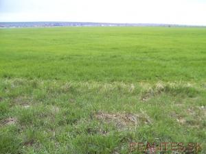 Predaj Pozemok Nitra